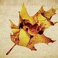Oak Leaf by Andrea Anderegg