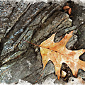 Oak Leaf On The Rocks by Peter J Sucy