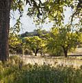 Oak Meadow by Sharon Foster