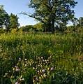 Oak Savanah by Larry Ricker