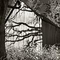 Oak Shadows On A Barn by Kevin Felts