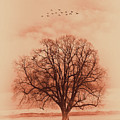 Oak Tree Alone  by Gull G