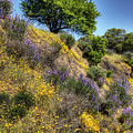 Oak Tree And Wildflowers by Jim And Emily Bush