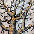 Oak Tree by John Terwilliger