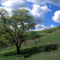Oak Tree With Clouds by Kathy Yates