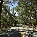 Oak Trees Along Live Oak Canyon Road by Linda Brody