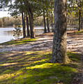 Oak Trees Along The Mossy Lake Shore by MM Anderson