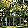 Oak Trees In Front Of A Mansion, Oak by Panoramic Images