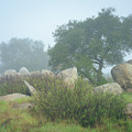 Oaks And Boulders In Morning Fog by Alexander Kunz