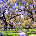 Oaks And Spanish Moss by Dominic Piperata