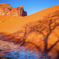 Oasis Tree Shadow by Inge Johnsson