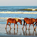 Obx Wild Horses by Don Mercer