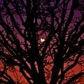 Ocala Moonrise by Kari Tedrick