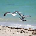 Ocean Birds by Rob Hans