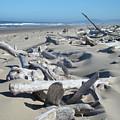 Ocean Coastal Art Prints Driftwood Beach by Baslee Troutman