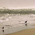 Ocean Edge by Steve Karol