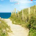Ocean Path In Cornwall by Amanda Elwell