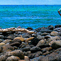 Ocean Watch by James Temple
