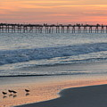 Oceanana Shorebirds by Dan Williams