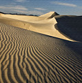 Oceano Dunes by Sharon Foster