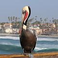Oceanside Pelican  by Christy Pooschke