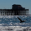 Oceanside Resident Photograph by Kimberly Walker