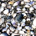 Ocracoke Shells by Wayne Potrafka