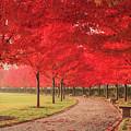 October Dream by Scott Rackers
