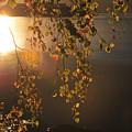 October Light by Randi Grace Nilsberg