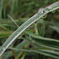 October Rain 3 by Kim Tran