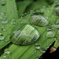 Big Drops Of Rain by Kim Tran
