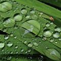 Drops Of Rain by Kim Tran