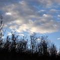 October Skies by Marilynne Bull