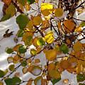 October Snow by Marilynne Bull