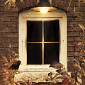 October Window by Robin-Lee Vieira