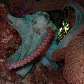 Octopus On Night Dive by Nina Banks