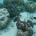 Octopus Reef 3 by Michael Scott