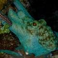 Octopus Yoga by Nina Banks