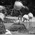 Odd Bird Out In Black And White by Rob Hans