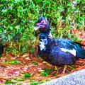 Odd Looking Duck In Swansboro Nc 2 by Jeelan Clark