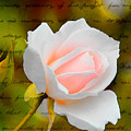 Ode To A Rose by Diane Wood