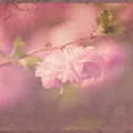 Ode To Spring by Debbie Nobile