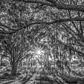 Odessa Sunrise -black And White by Lance Raab