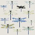 Odonata by Sarah Hough