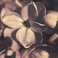 Of Lilac Tales She Tells by Jennifer Kuehne