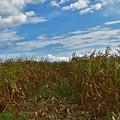 Of The Corn  by Lisa Kleiner