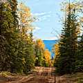 Off The Alaska Highway by Cathy Mahnke