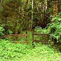 Off The Beaten Path Haida Gwaii Bc by Barbara St Jean