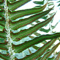 Office Art Ferns Green Forest Fern Giclee Prints Baslee Troutman by Baslee Troutman