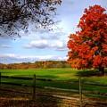 Oh Beautiful Tree by Ronda Ryan